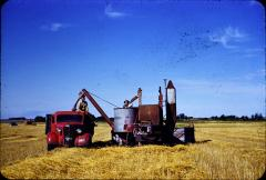 Irvin and Eldon Olstad cultivating 1950s